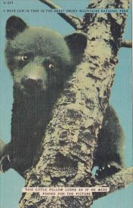 A Bear Cub In Tree In The Great Smorky Mountains National Park Tennessee