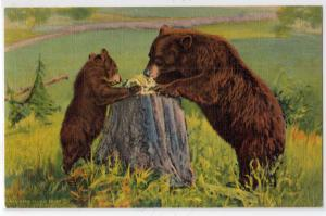 Bears, Learning Table Manners