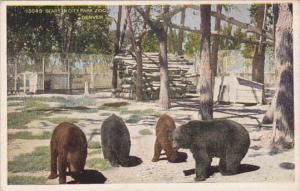 Bears In City Park Zoo Denver Colorado