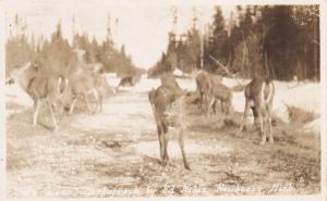 RP: Deer , NEWBERRY , Michigan , PU-1928