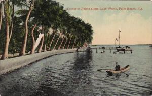 Florida Palm Beach Cocoanut Palms Along Lake Worth