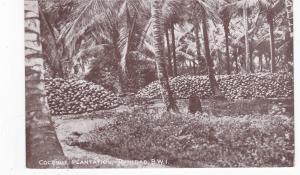 Coconut Plantation , Trinidad , B.W.I. , 1900-10s