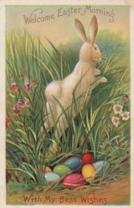 EASTER , Rabbit & Eggs , 1911