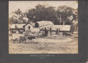 RP: Making Cocoa Nut Oil , CEYLON , 00-10s