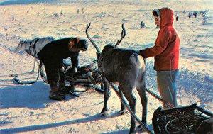 Reindeer in Finnish Lap Land Finland, Suomi Unused