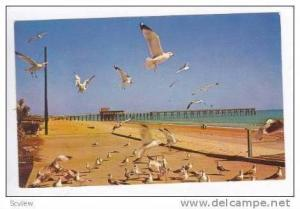 Sea Gulls On The Boardwalk, Myrtle Beach, South Carolina, 1967