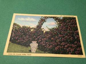 Lower Rio Grande Valley Texas TX Postcard FREE Shipping ID#1520