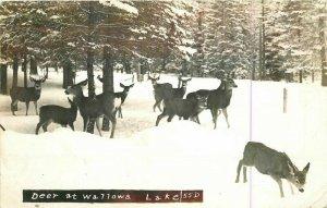 Deer Wallowa Lake Oregon Winter 1961 RPPC Photo Postcard 20-5588