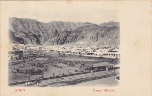 Camel Market, Aden, Yemen, 1900-1910s