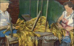 Grading the Cured Tobacco for Market Farming Postcard Post Card Unused