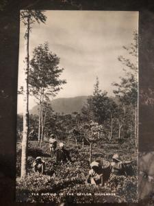 Mint Ceylon Real Picture Postcard Tea Picking In The Highlands