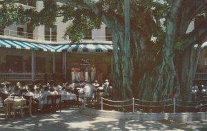MOANA HOTEL, Hawaii, 40-60s; Hawaii Calls Show Tree