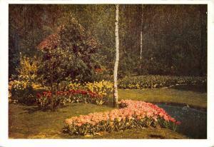 Netherlands Lisse Keukenhof Fleurs Flowers Tulips Postcard
