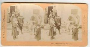 SV,Children Ride on Oxen,Prepare for Trip in Snow,1890s