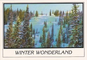 Skiing Winter Wonderland Colorado