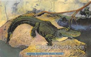 Miami, FL, USA Alligator, Parrot Jungle Postcard Post Card Miami, FL, USA All...