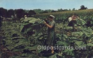 Amish Homestead Farming Postcard Post Card Lancaster, PA, USA Amish Homestead