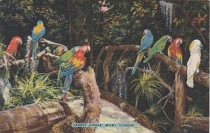 Florida Miami Colorful Macaws & Cockatoo Parrot Jungle Red Road