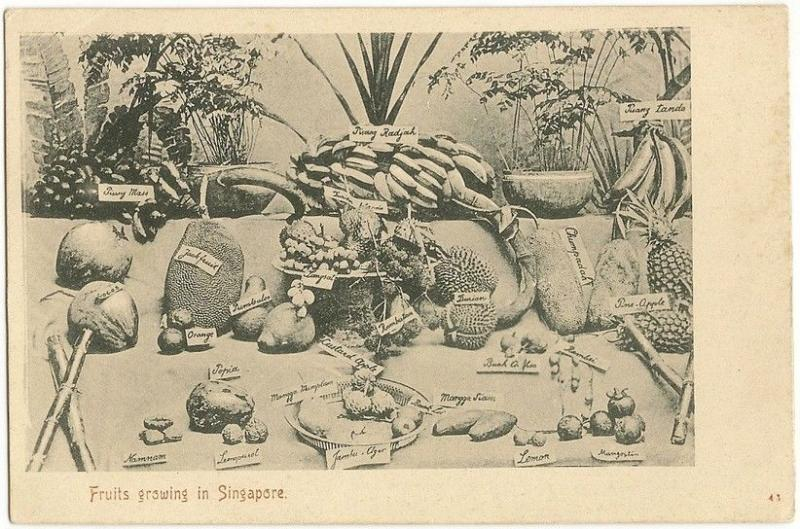Singapore Fruits c.1905 UB postcard