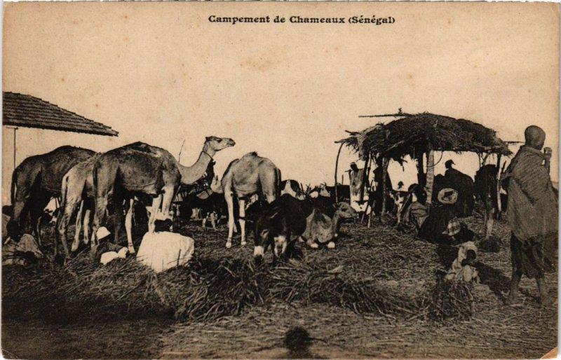 CPA AK SENEGAL Campement de Chameaux (67939)