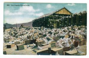 Los Angeles, California Pigeon Farm PPC unused