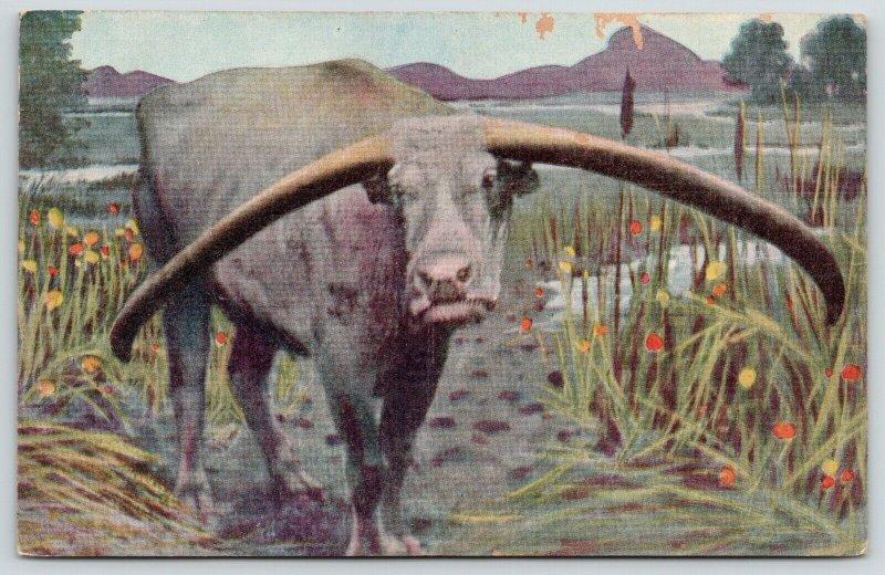 Philippines Native: Water Buffalo (Carabao) Flintstones Fraternity Namesake 1908
