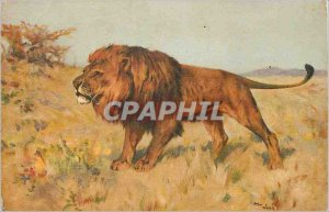 Postcard Old Lion
