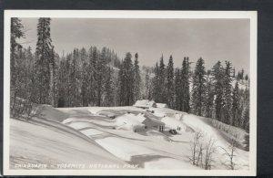 America Postcard - Chinquapin - Yosemite National Park, California   T5034