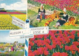 Netherlands Holland Land Of Flowers