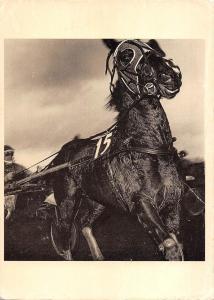 B98682 horse chaveaux musee de l elysee lausanne switzerland postcard  animals