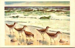 Maine Beach Scene Sandpipers By Gene Klebe