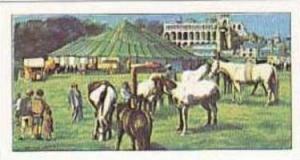 Amaran Tea Vintage Trade Card The Circus 1966 No 7 Horses In The Circus