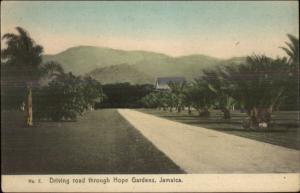 Jamaica Thru Hope Gardens c1910 Postcard