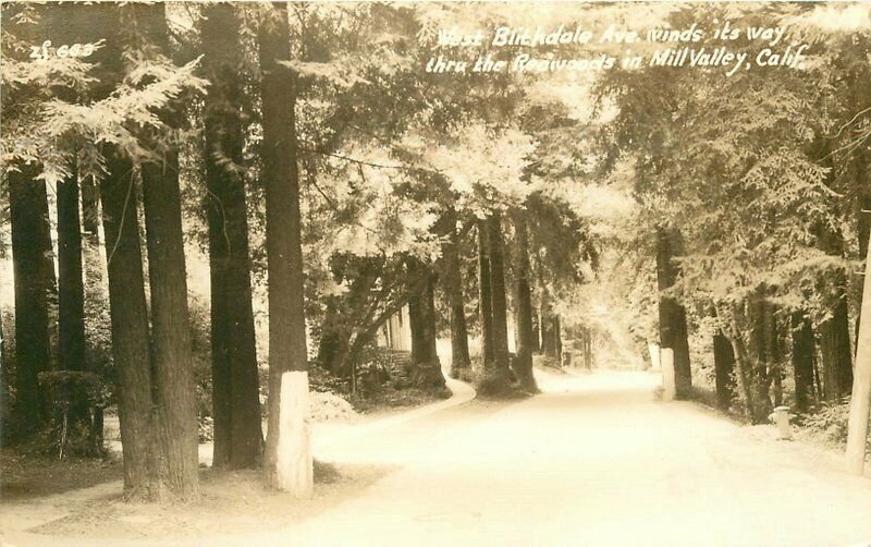 Blithdale Avenue Redwoods Mil Valley 40s Marin RPPC Photo Postcard 20-3110