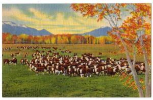 Cattle on the Range