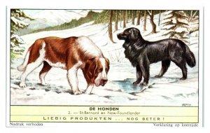 St. Bernard and Newfoundland Dog, Dog Breeds II Liebig Belgian Trade Card *VT28C