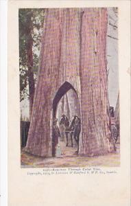 Roadway Through Giant Cedar Tree Washington