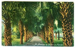 Conklingville to Corinth, New York 1910 used Postcard, Florida Palm Trees
