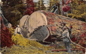 Logging Post Card Timber Scene in the Northwest Unused