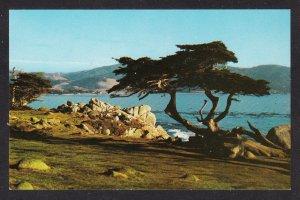 CA - Monterey - Monterey Cypress - Dexter chrome - 79907