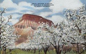 Linen c1930-45 USA Postcard Peach Orchard in Bloom Mt Garfield Colorado 41Z