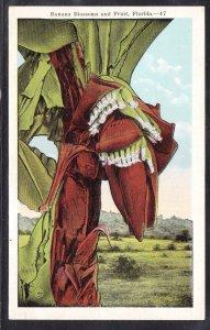 DOLLAR BOX – FL - Banana Blossoms and Fruit