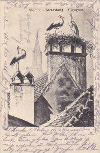 Storks Stoerche Strassburg Cigognes 1905