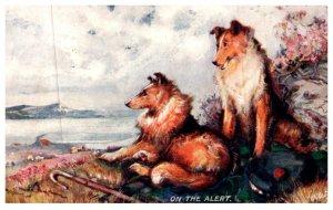 Dog ,   SCotch Collie pair