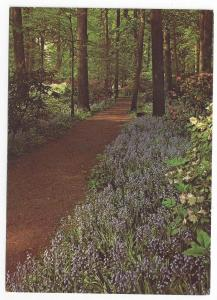 Winterthur Museum Gardens DE Bluebells Tanbark Path Postcard
