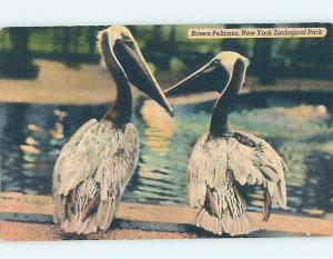 Linen PELICAN BIRDS AT ZOO New York City NY hk7366