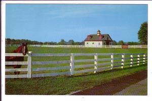 Blue Grass Horse Farm, Lexington, Kentucky,  Photo Brock