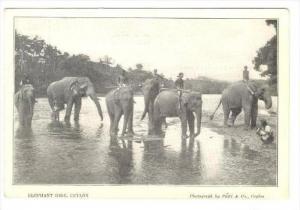 Elephant Ride, Ceylon,  00-10s