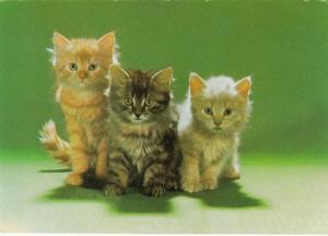 Three Serious Tabby Kittens, 50-70s