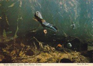 Wolf Eel Undersea Gardens Inner Harbour Victoria British Columbia Canada